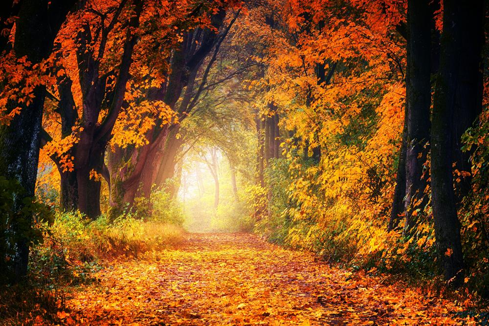 Herbsturlaub auf der Wartburg in Eisenach buchen